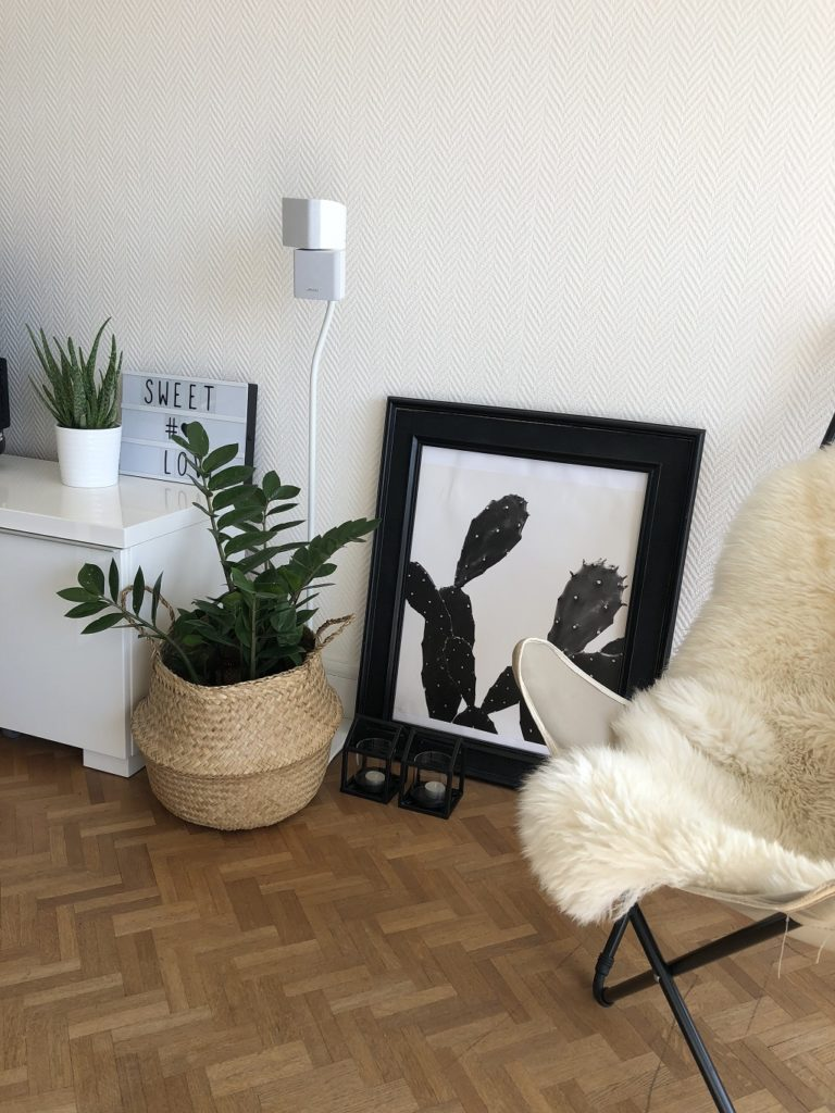 decoration plantes vertes